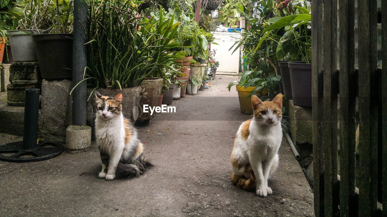 mammal, animal, animal themes, pets, domestic animals, domestic, cat, feline, domestic cat, group of animals, vertebrate, plant, looking at camera, two animals, portrait, no people, day, nature, sitting, whisker