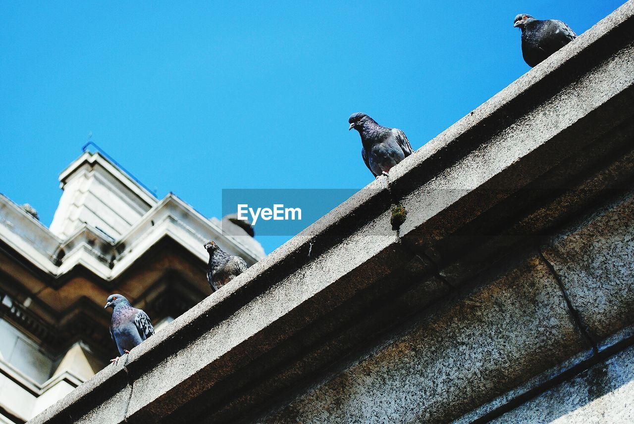 Low Angle View Of Pigeons On Roof Against Clear Sky