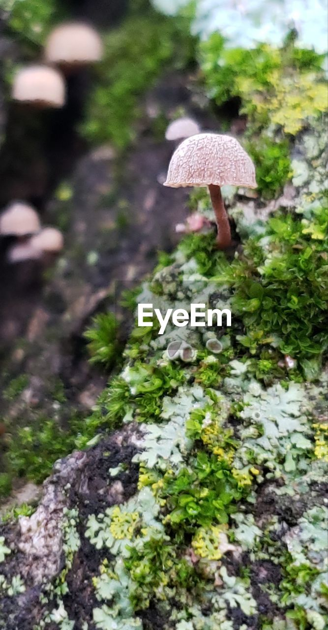 fungus, mushroom, growth, vegetable, plant, food, day, selective focus, nature, beauty in nature, toadstool, close-up, land, tree, outdoors, focus on foreground, no people, green color, moss, field
