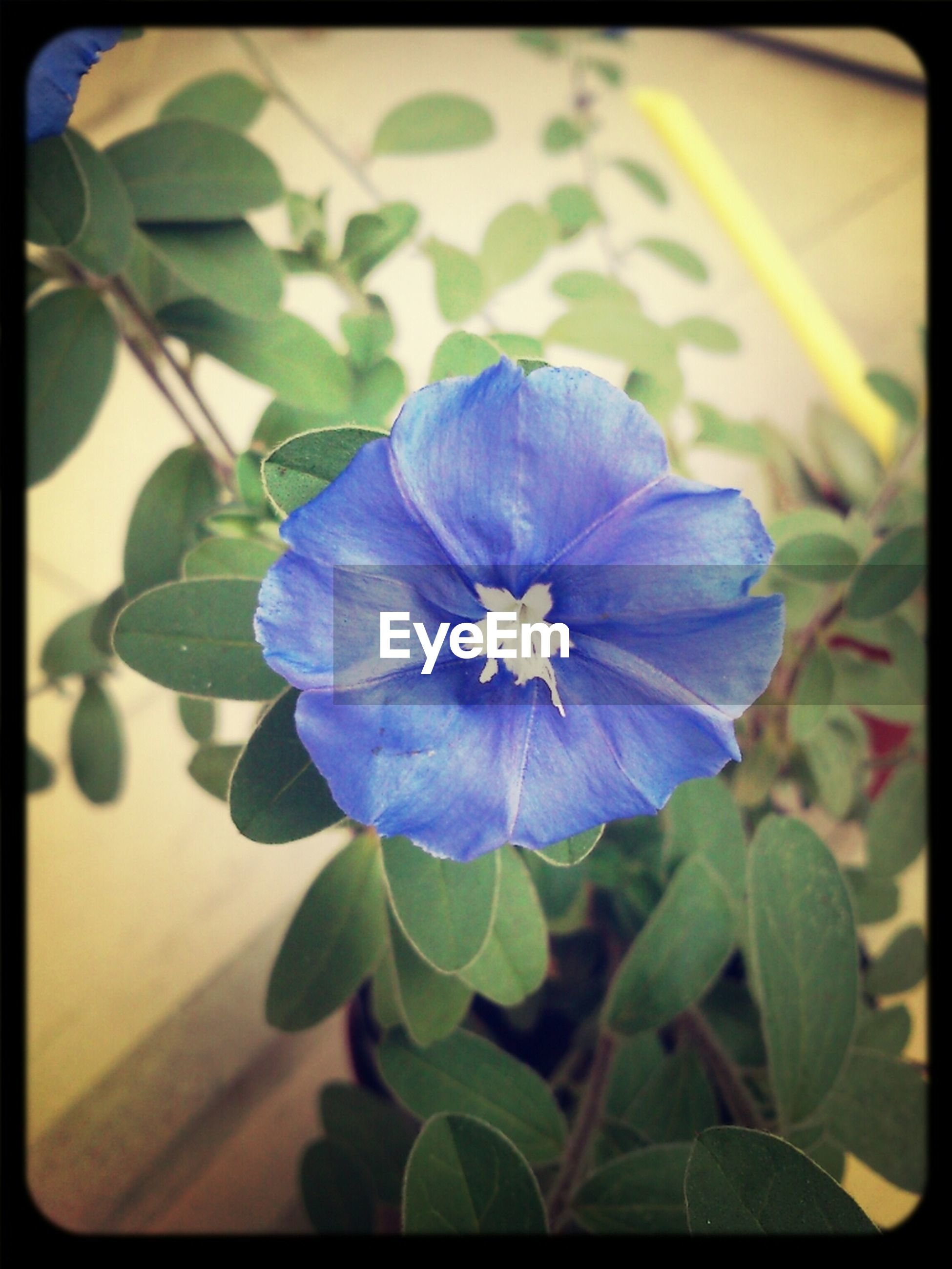 flower, petal, freshness, fragility, flower head, growth, leaf, beauty in nature, purple, transfer print, close-up, plant, nature, blooming, auto post production filter, blue, focus on foreground, single flower, in bloom, blossom