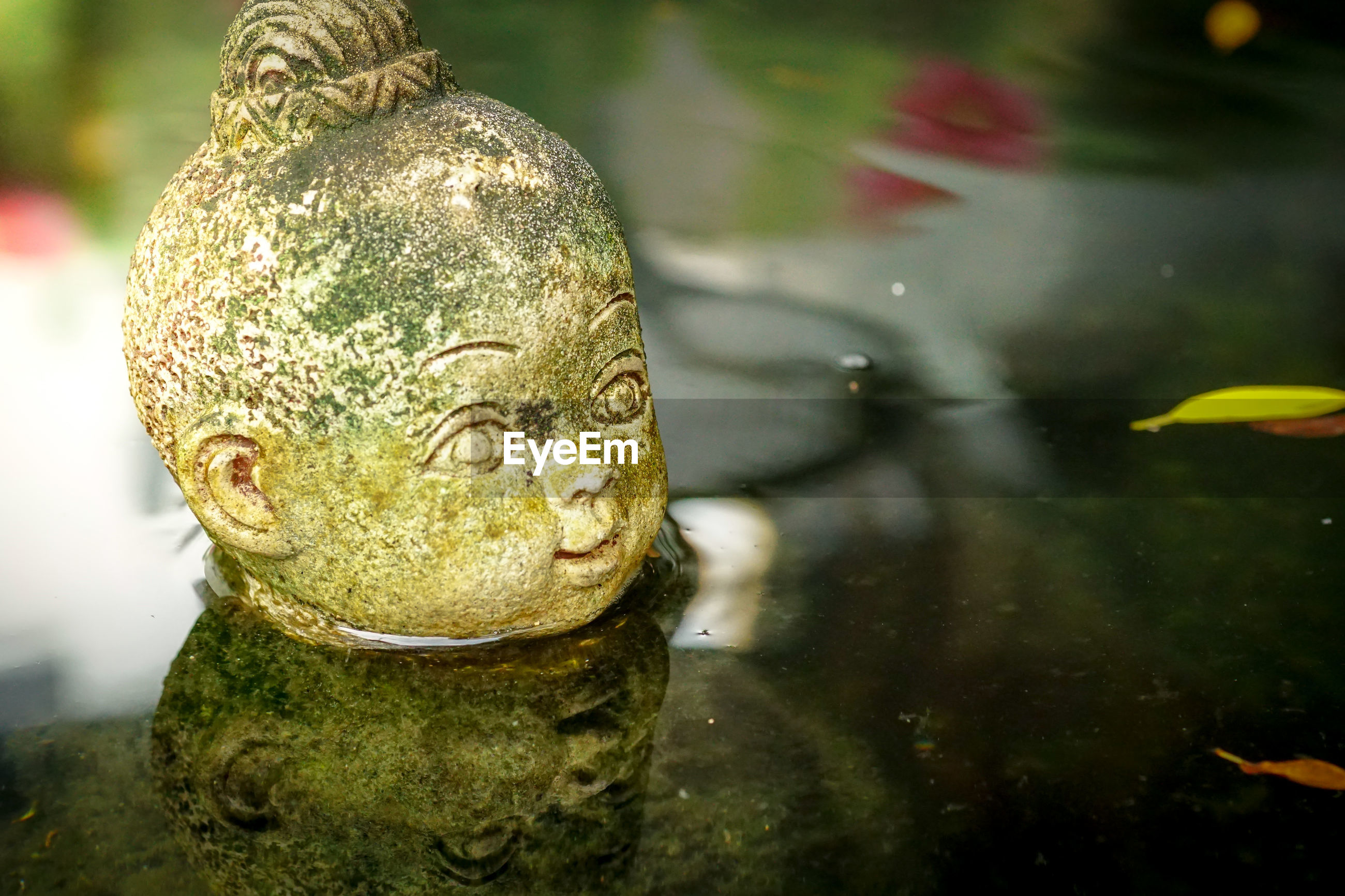 Close-up of statue in water
