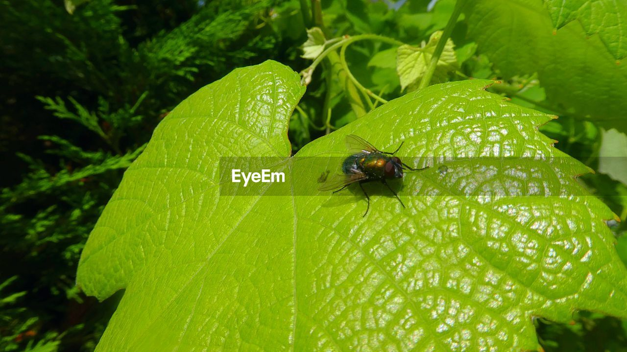 insect, animal themes, plant part, invertebrate, animal, leaf, one animal, animal wildlife, animals in the wild, plant, green color, growth, nature, close-up, water, day, no people, drop, beetle, beauty in nature, outdoors, small, dew