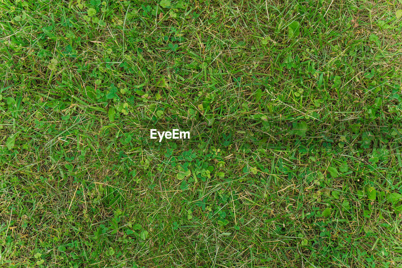HIGH ANGLE VIEW OF GRASS ON FIELD