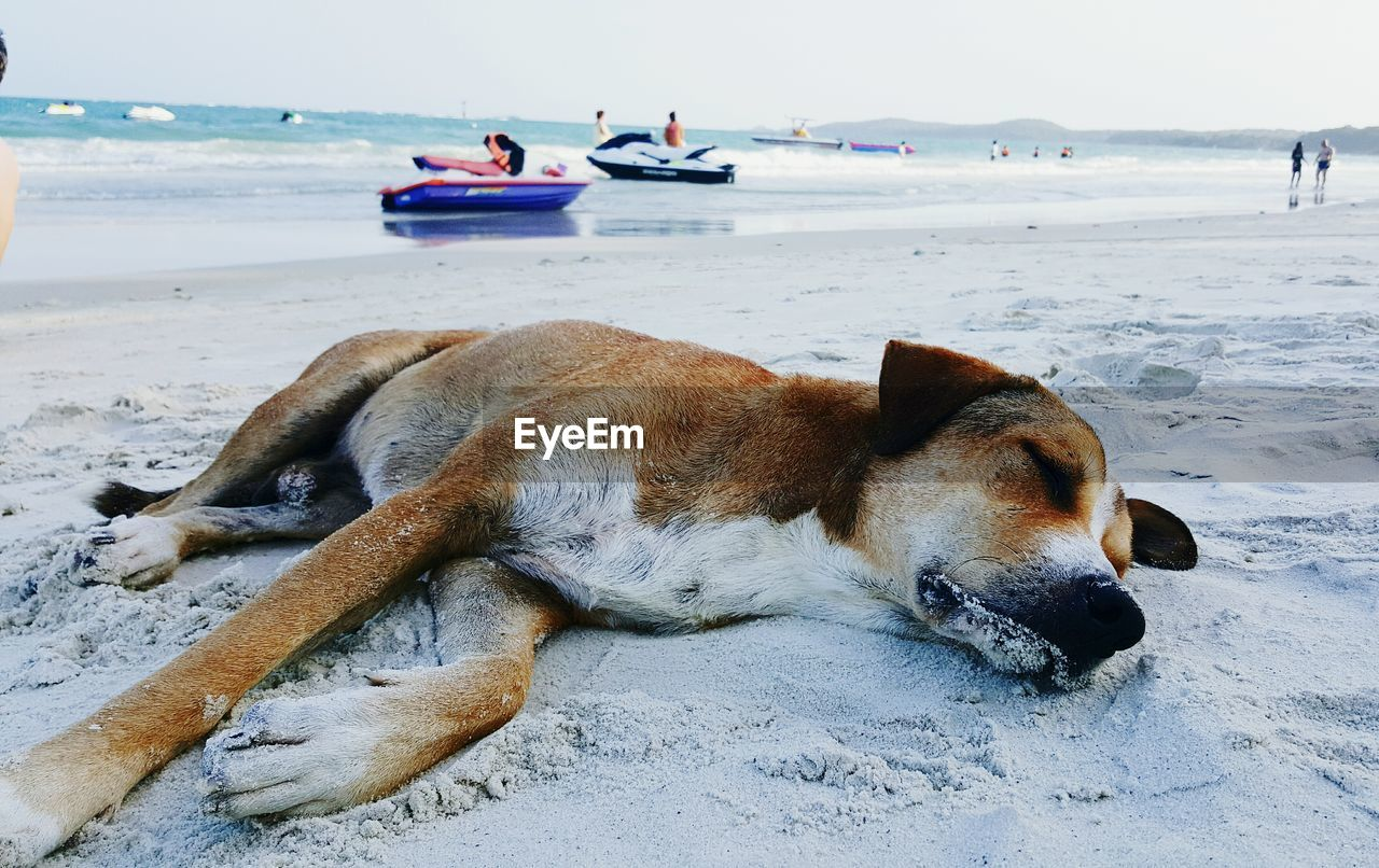 dog, sea, animal themes, beach, pets, mammal, domestic animals, one animal, sand, water, horizon over water, nature, outdoors, day, beauty in nature, relaxation, scenics, no people, sky