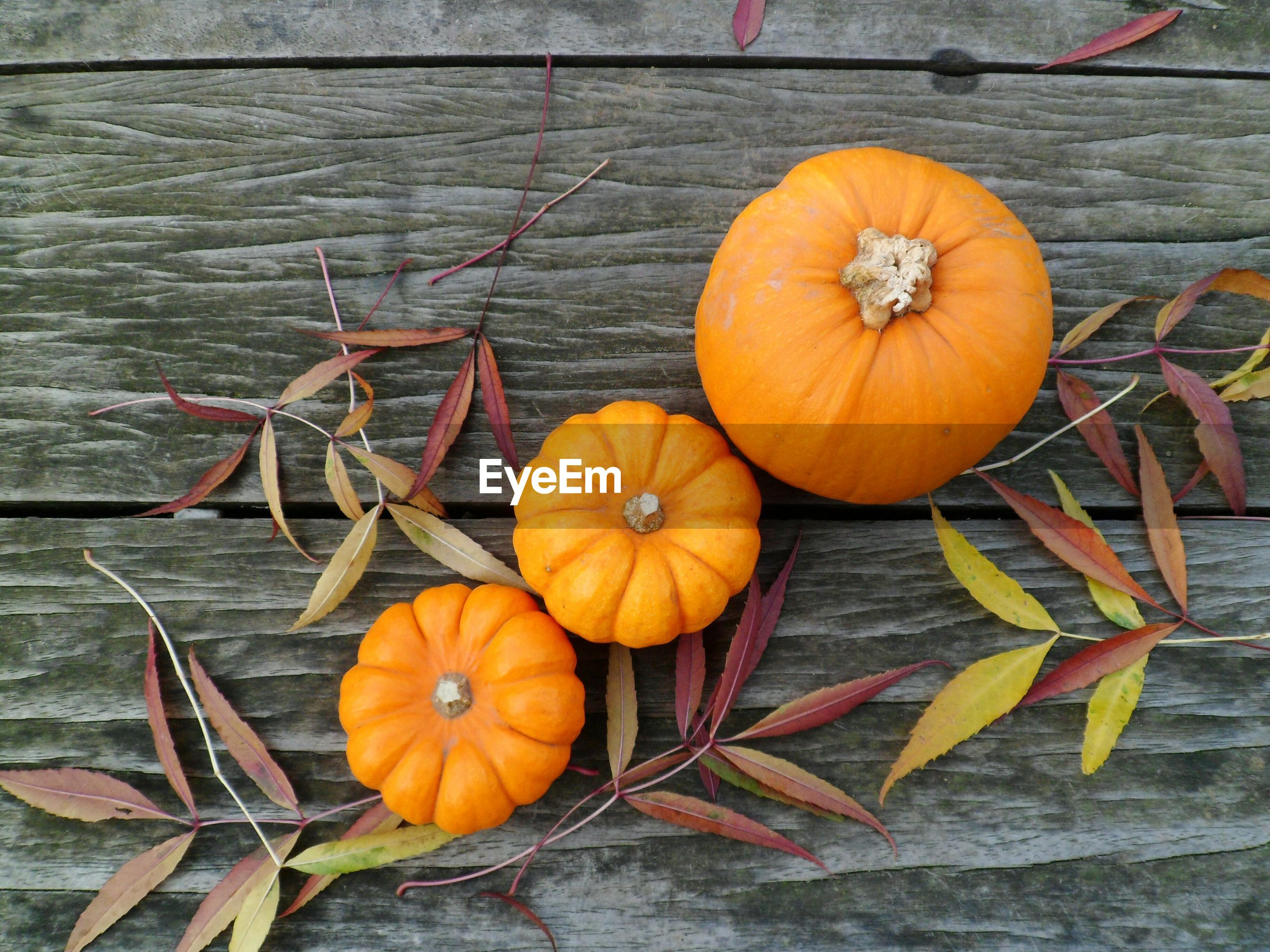 Close-up of pumpkins on wood during autumn