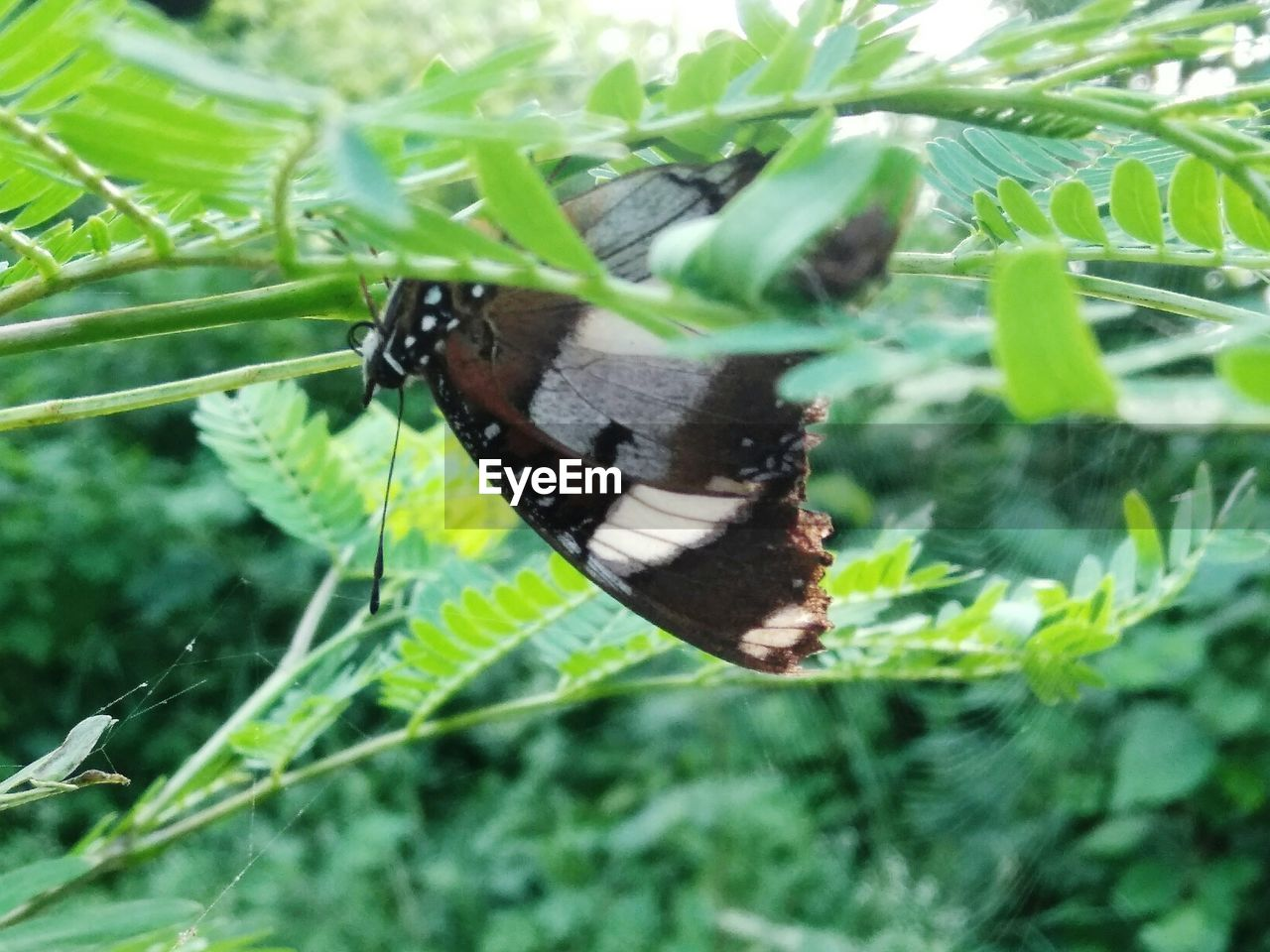 insect, butterfly - insect, animal themes, one animal, animals in the wild, butterfly, plant, wildlife, nature, leaf, growth, no people, green color, outdoors, close-up, animal wildlife, day, fragility, beauty in nature, full length, freshness