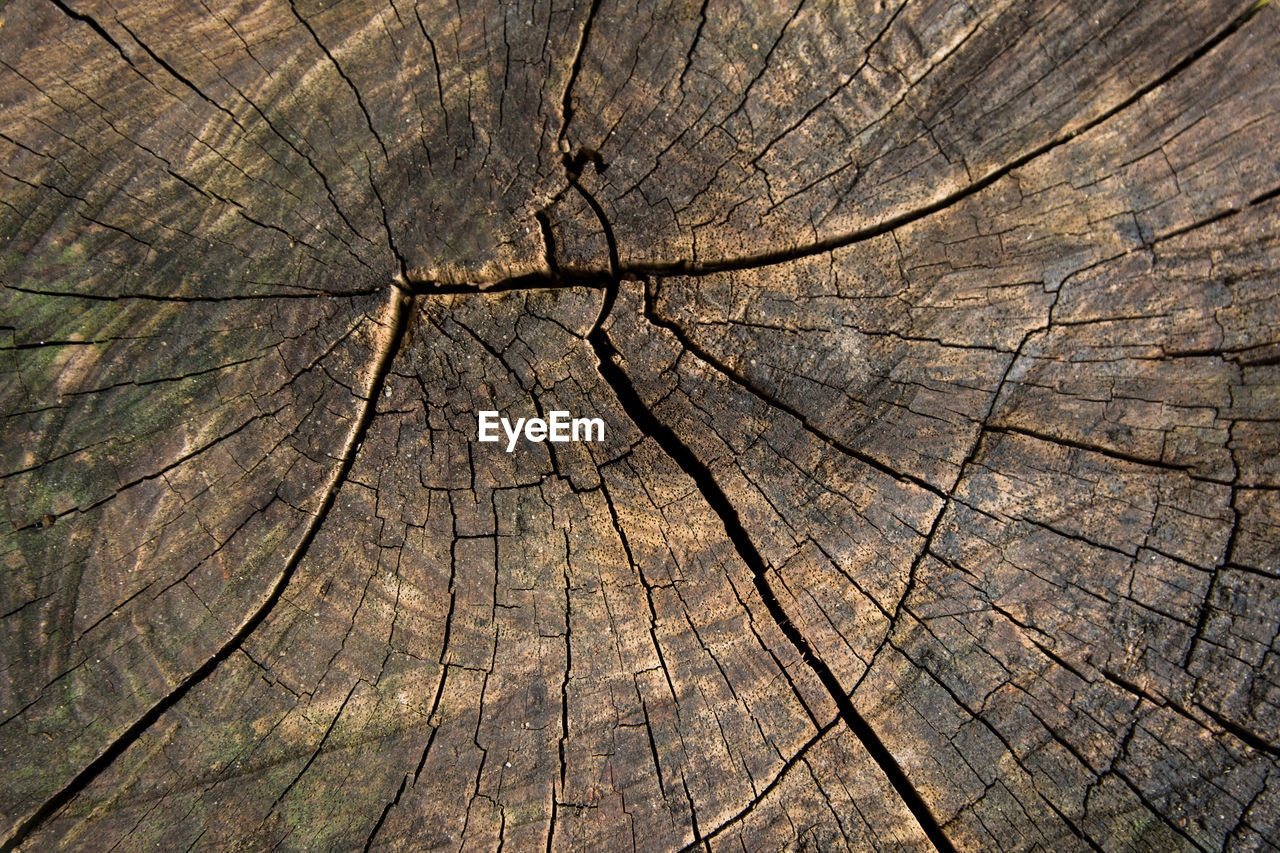 tree stump, backgrounds, textured, cracked, bark, tree ring, full frame, wood - material, tree, pattern, natural pattern, close-up, no people, brown, cross section, nature, wood, day, rough, outdoors, concentric, textured effect, wood grain
