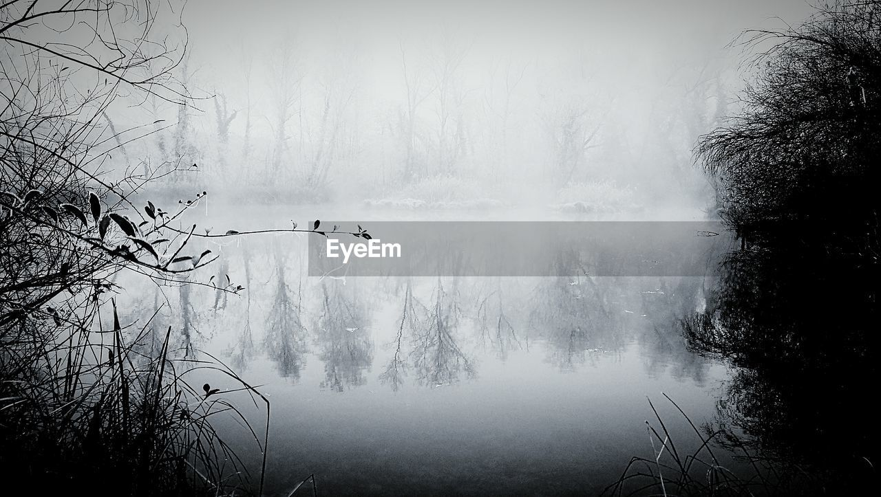 nature, tree, beauty in nature, fog, water, bare tree, scenics, tranquil scene, mist, outdoors, lake, tranquility, no people, day, winter, landscape, hazy, forest, cold temperature, branch, sky