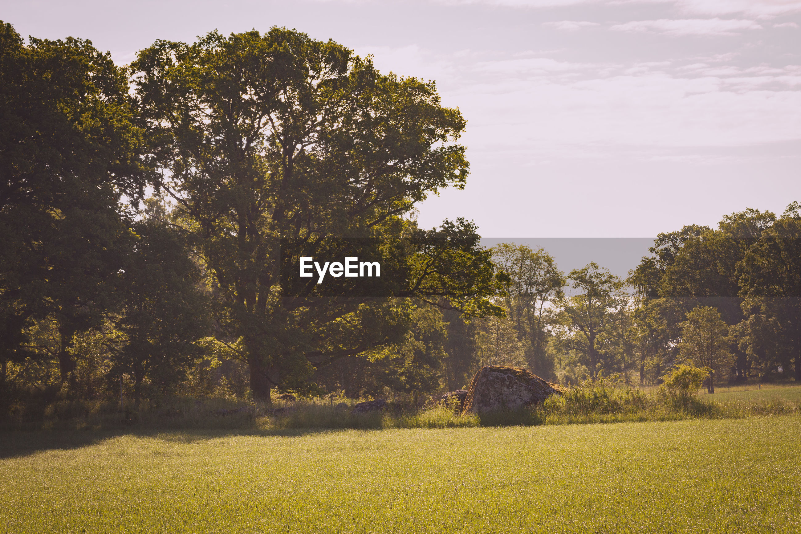SCENIC VIEW OF FIELD AND TREES