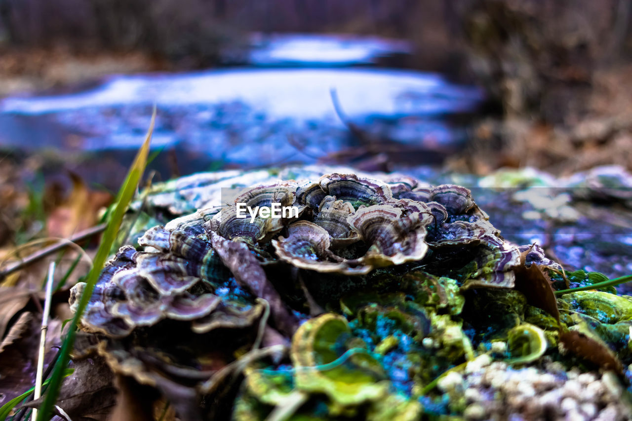 nature, no people, selective focus, close-up, outdoors, day, fungus, toadstool, beauty in nature, fragility, water, animal themes, fly agaric