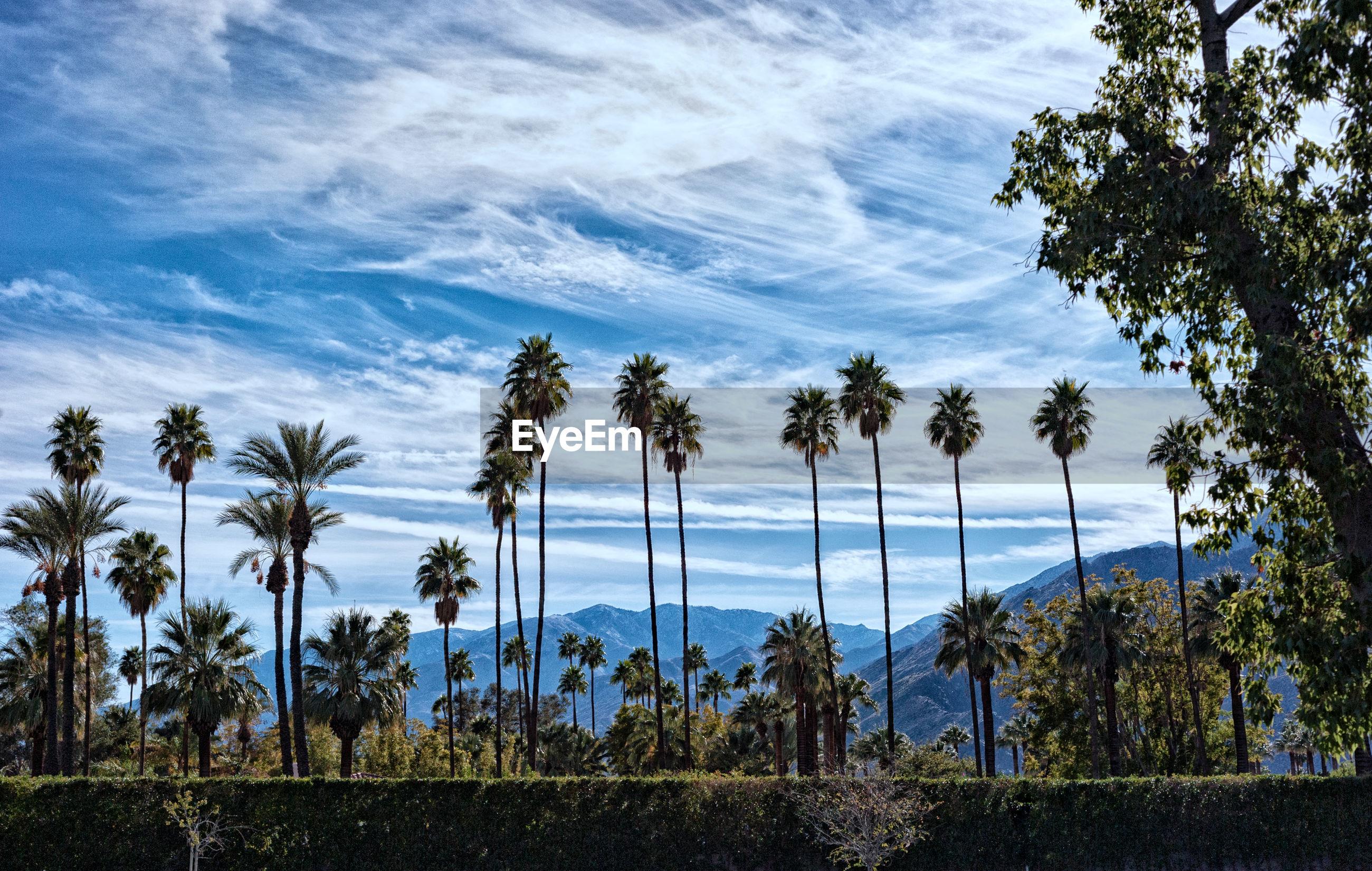 PALM TREES AGAINST BLUE SEA