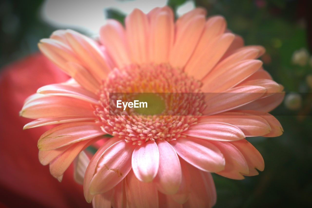 flower, petal, flower head, fragility, beauty in nature, nature, growth, freshness, focus on foreground, plant, close-up, pollen, blooming, day, outdoors, no people