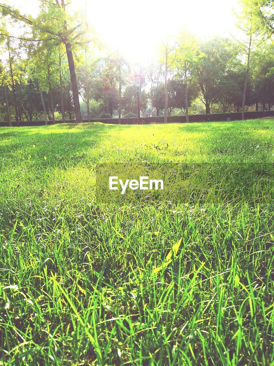 grass, nature, tranquility, beauty in nature, tranquil scene, field, green color, growth, tree, no people, day, sunlight, scenics, outdoors, landscape, freshness