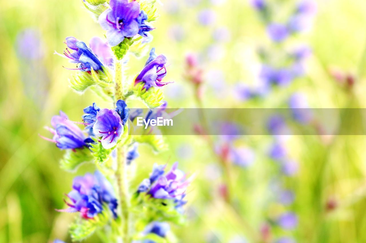 flowering plant, flower, plant, freshness, beauty in nature, vulnerability, fragility, growth, close-up, petal, purple, selective focus, nature, flower head, no people, inflorescence, day, botany, field, land, springtime, lavender
