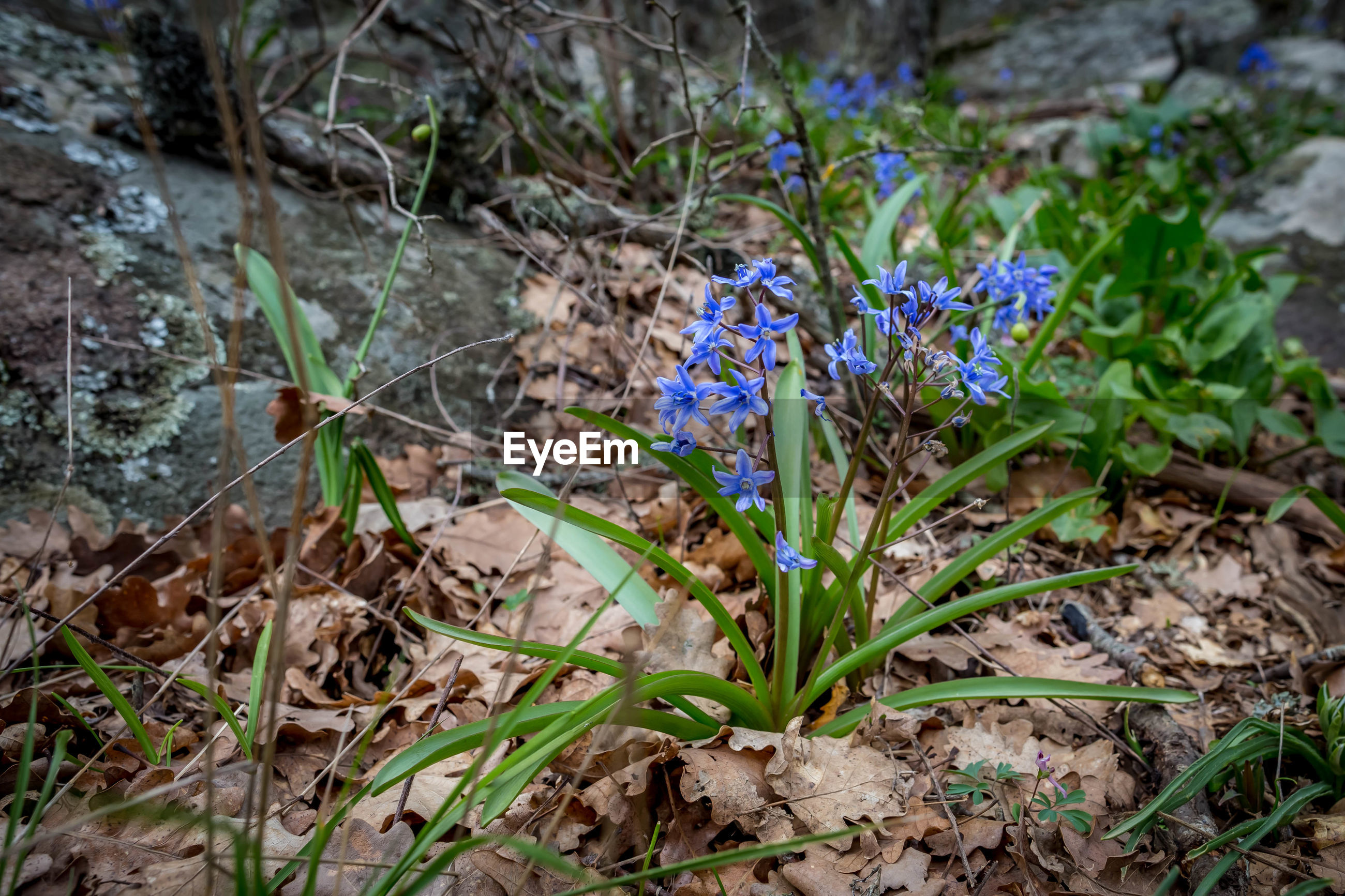 plant, growth, land, vulnerability, fragility, plant part, flower, field, leaf, flowering plant, beauty in nature, freshness, nature, close-up, day, selective focus, no people, high angle view, focus on foreground, green color, purple, outdoors, flower head, crocus