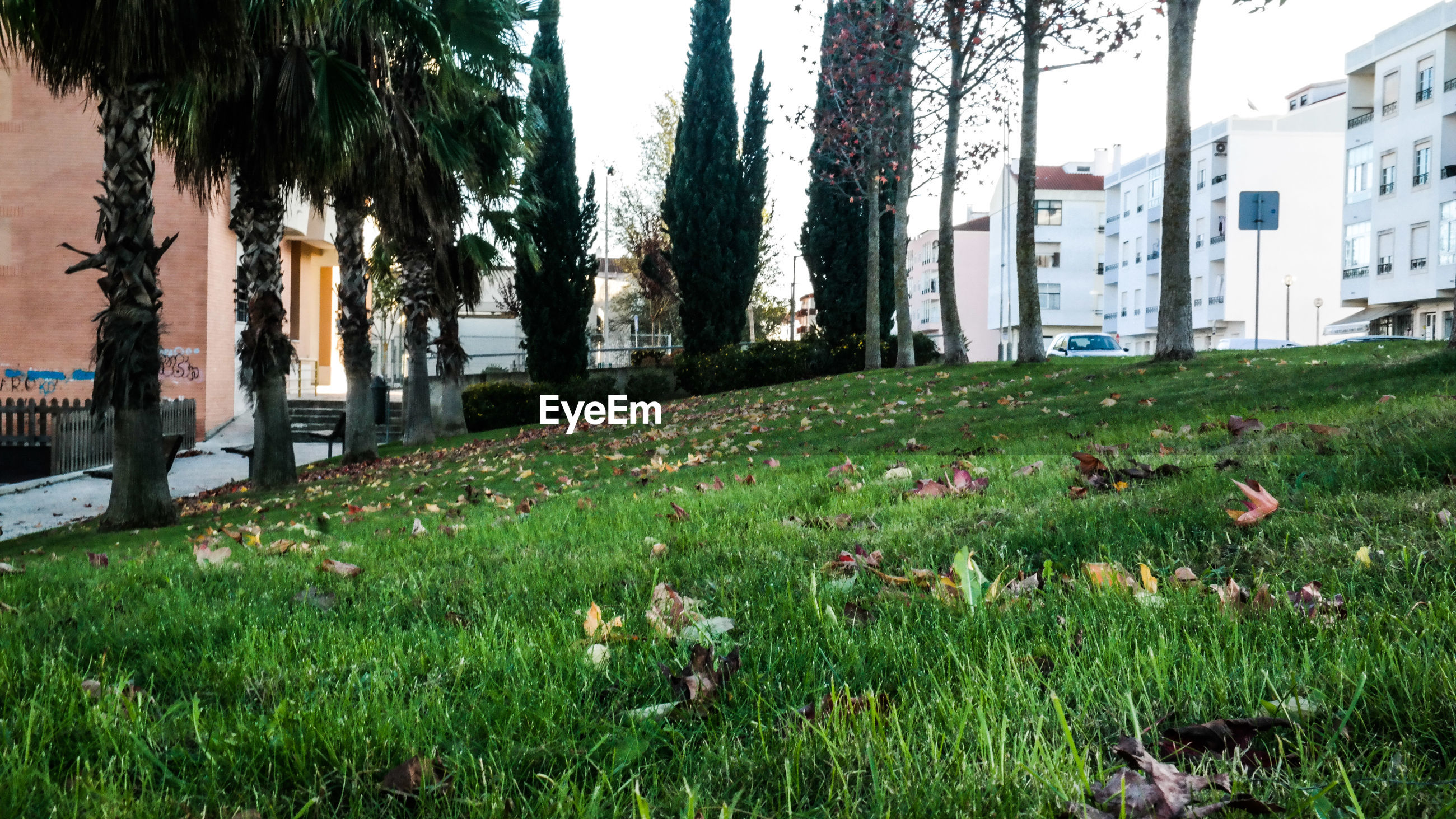 Trees growing on messy grassy field by buildings