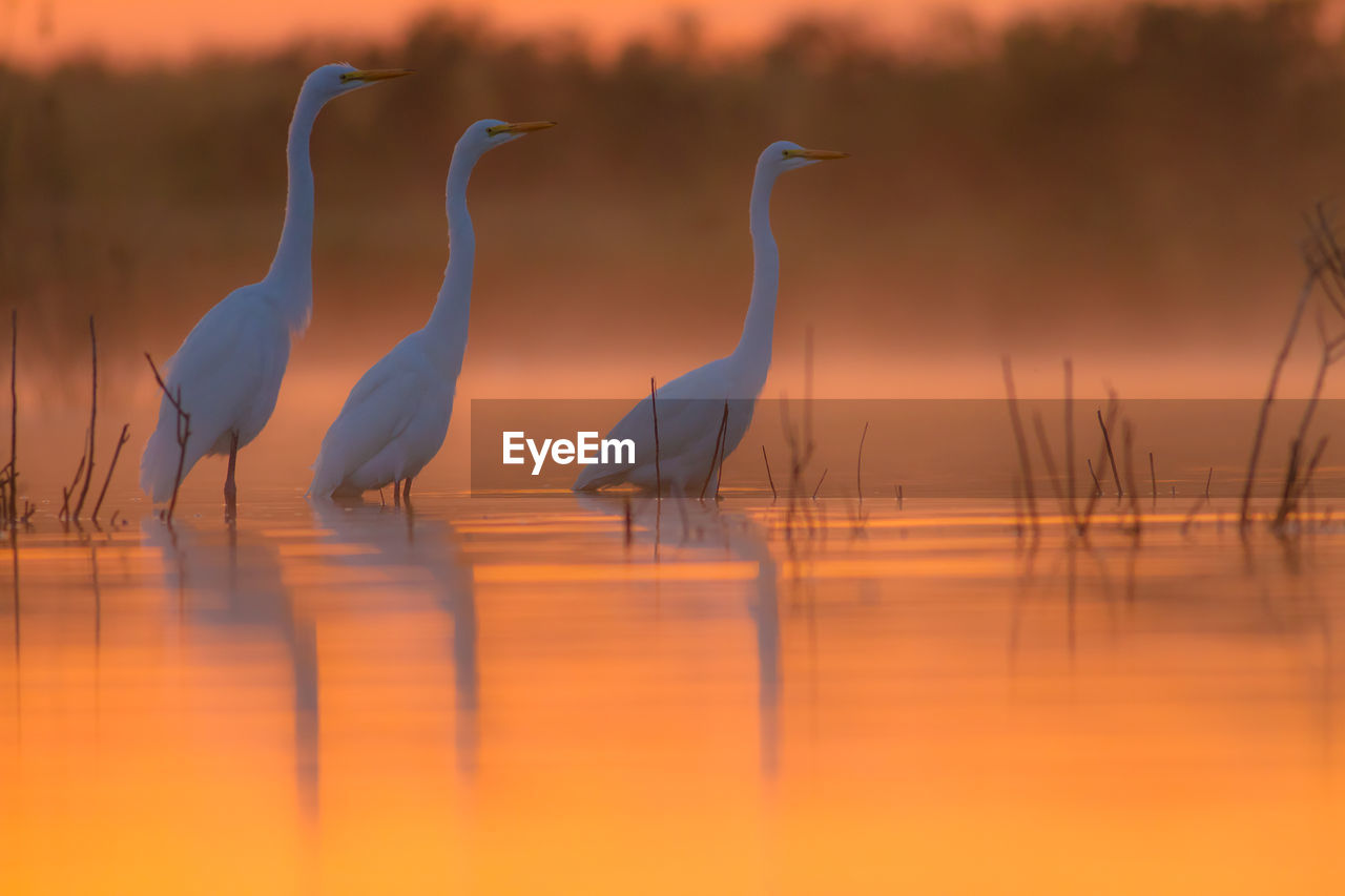 Close-up of birds in pond at sunset
