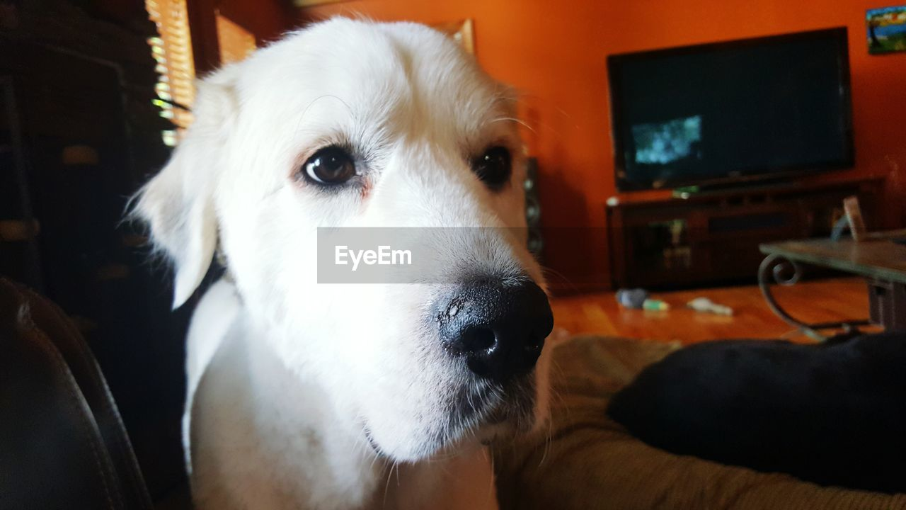 dog, pets, indoors, animal themes, domestic animals, one animal, close-up, mammal, no people, technology, day