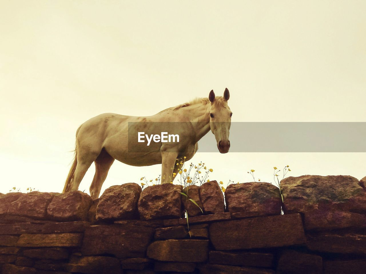 Low angle view of horse on stone wall against clear sky