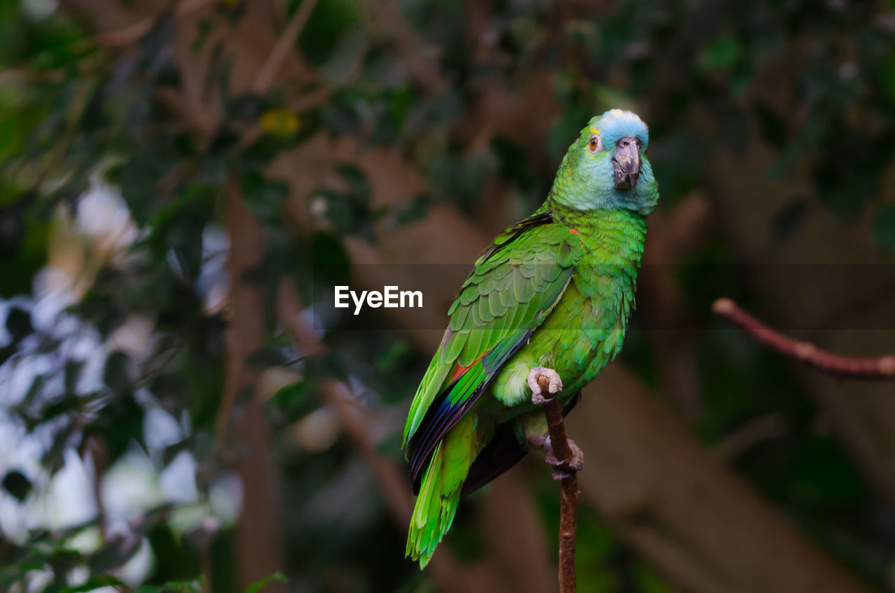 animal themes, animal, vertebrate, animal wildlife, bird, one animal, animals in the wild, perching, parrot, green color, plant, focus on foreground, no people, day, nature, tree, beauty in nature, outdoors, close-up, branch