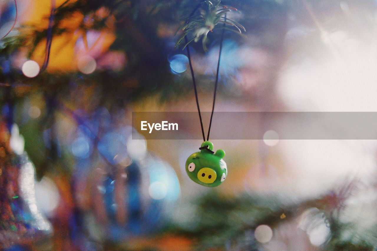 hanging, focus on foreground, close-up, no people, decoration, indoors, selective focus, celebration, nature, plant, day, christmas ornament, tree, animal, art and craft, representation, animal representation, christmas, illuminated