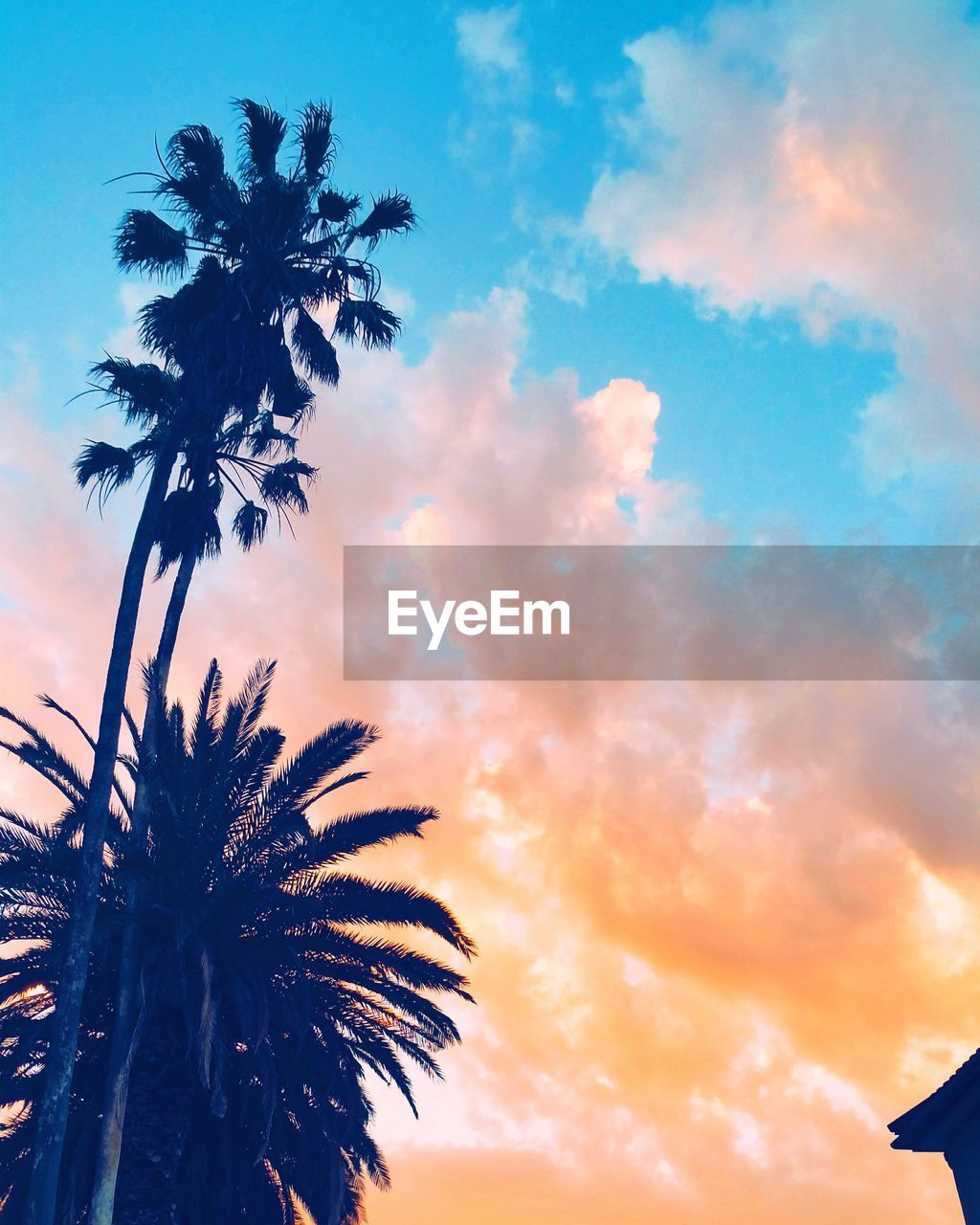 palm tree, tree, sky, low angle view, sunset, silhouette, cloud - sky, beauty in nature, outdoors, tree trunk, no people, scenics, nature, tranquil scene, tranquility, growth, day