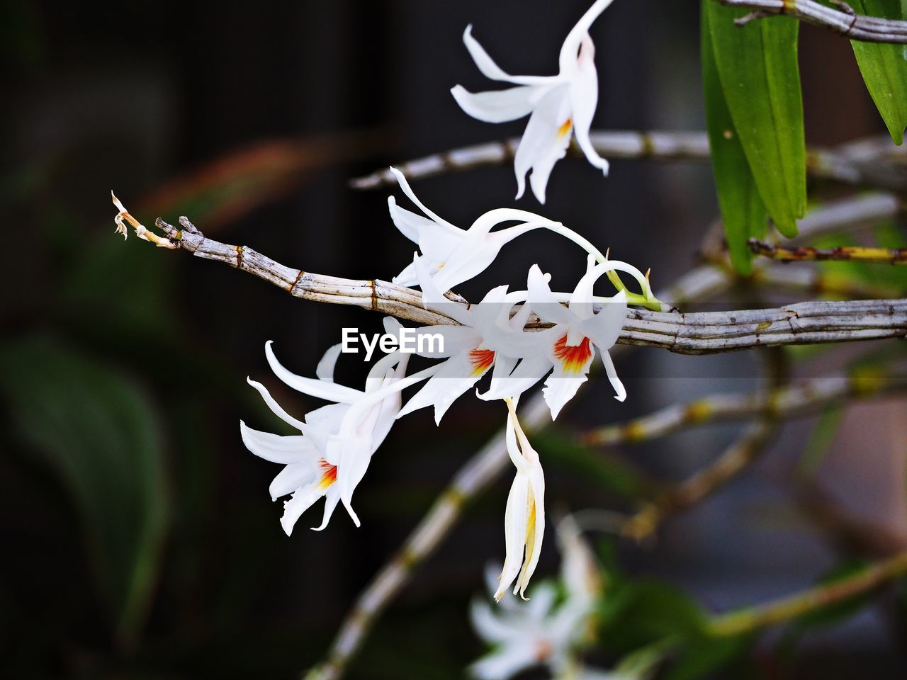 plant, flower, beauty in nature, flowering plant, growth, close-up, vulnerability, fragility, nature, petal, focus on foreground, white color, freshness, selective focus, pollen, branch, no people, day, inflorescence, flower head, outdoors, springtime