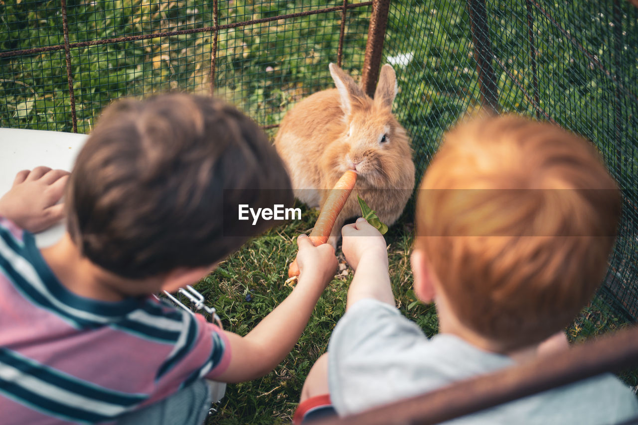 Siblings feeding carrot to rabbit on lawn