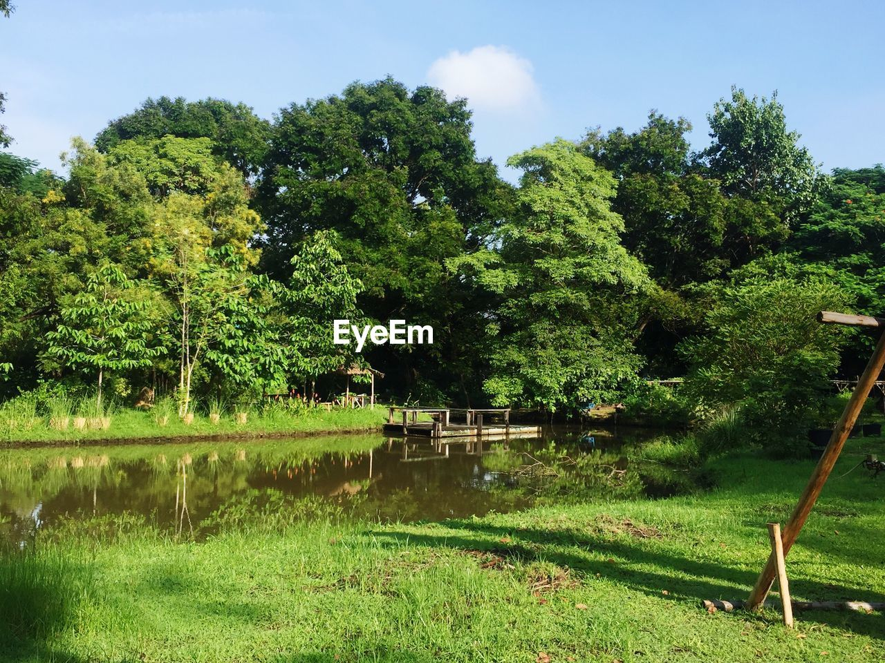 tree, plant, green color, growth, nature, grass, day, lake, tranquility, water, no people, land, beauty in nature, sky, tranquil scene, scenics - nature, outdoors, non-urban scene, field
