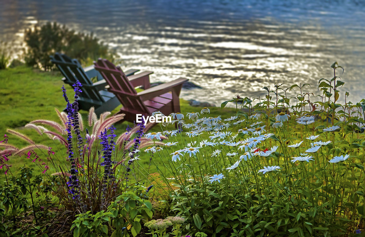 Flowers blooming on field by adirondack chairs on riverbank