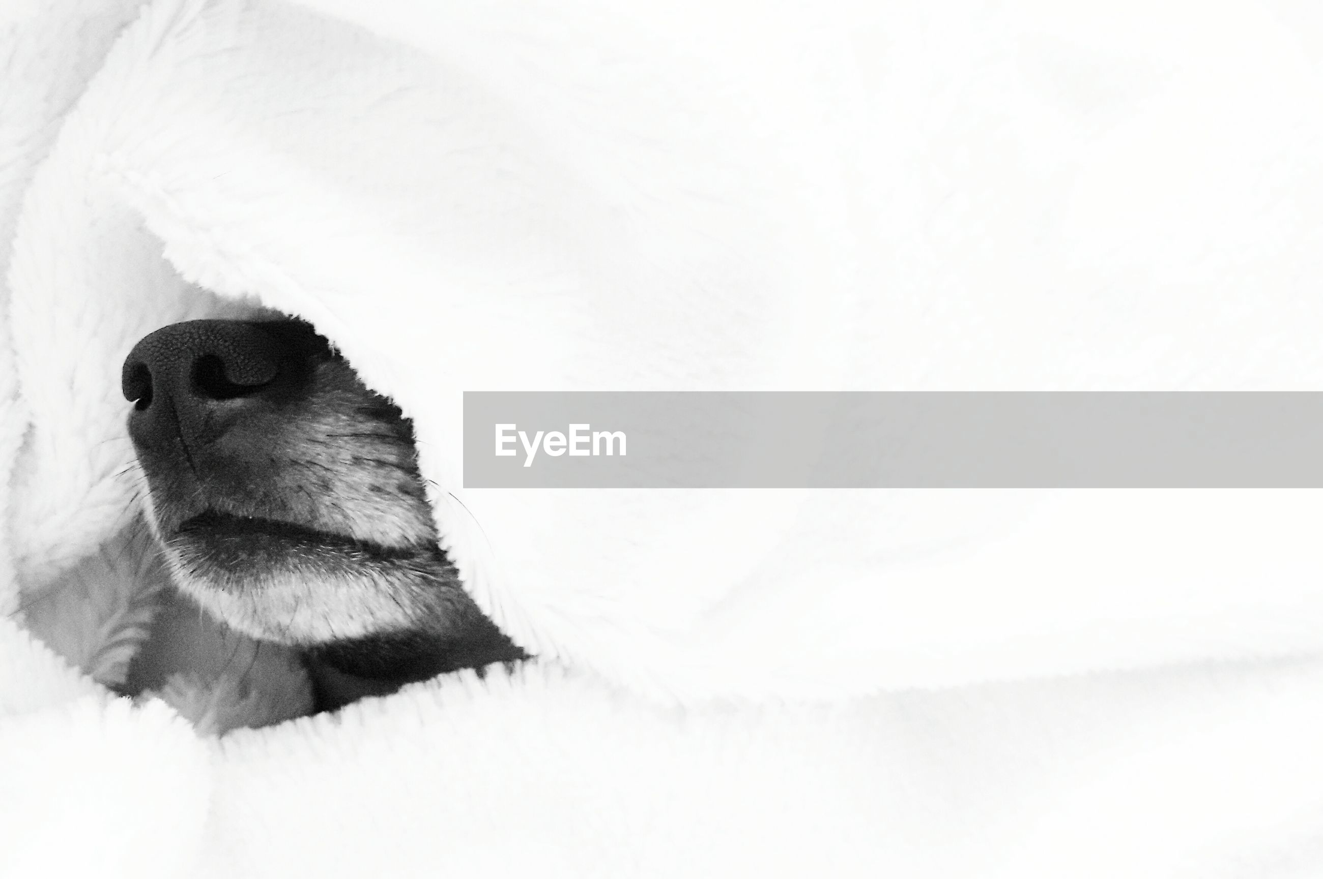 Cropped image of dog in white blanket