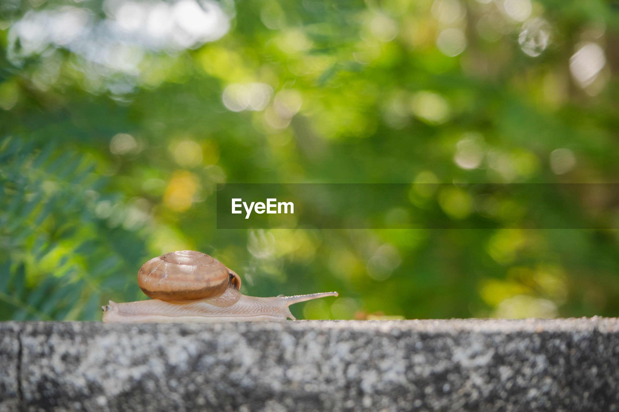 CLOSE-UP OF SNAIL ON RETAINING WALL AGAINST BLURRED BACKGROUND