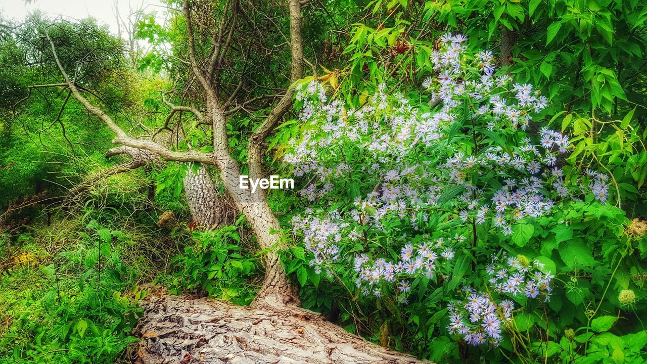 plant, growth, green color, beauty in nature, nature, flower, no people, flowering plant, day, tree, forest, tranquility, land, outdoors, plant part, freshness, leaf, tranquil scene, foliage, lush foliage