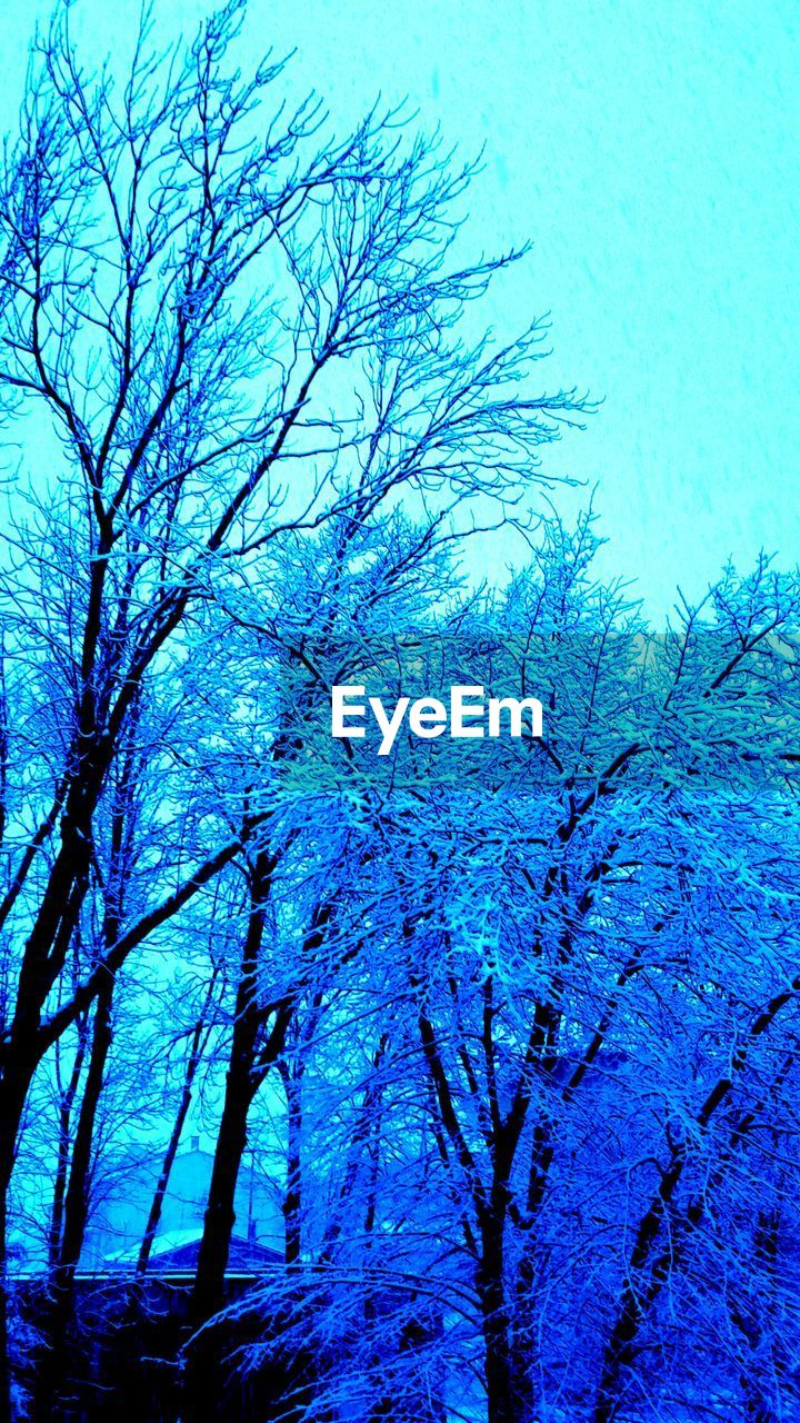 blue, nature, beauty in nature, winter, day, low angle view, no people, tranquility, clear sky, tree, sky, outdoors, growth, snow, cold temperature, bare tree, scenics, close-up