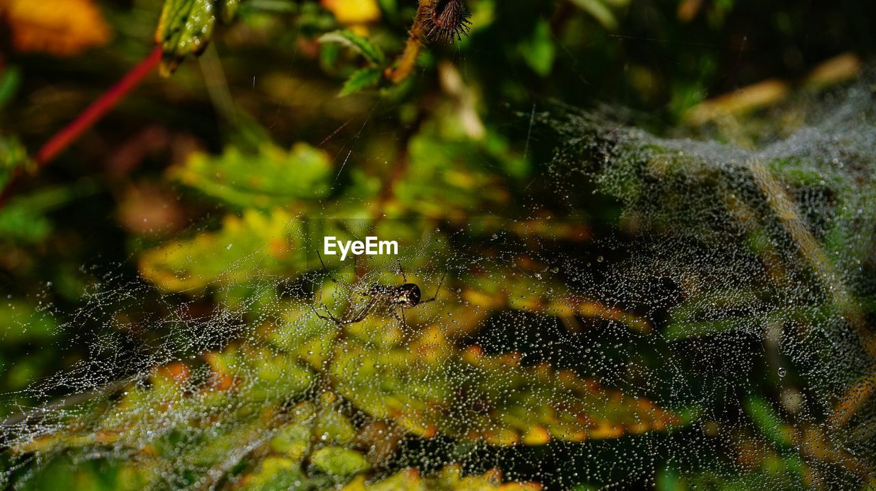 spider, spider web, one animal, close-up, animal themes, animals in the wild, nature, web, no people, outdoors, insect, day, focus on foreground, animal wildlife, water, beauty in nature