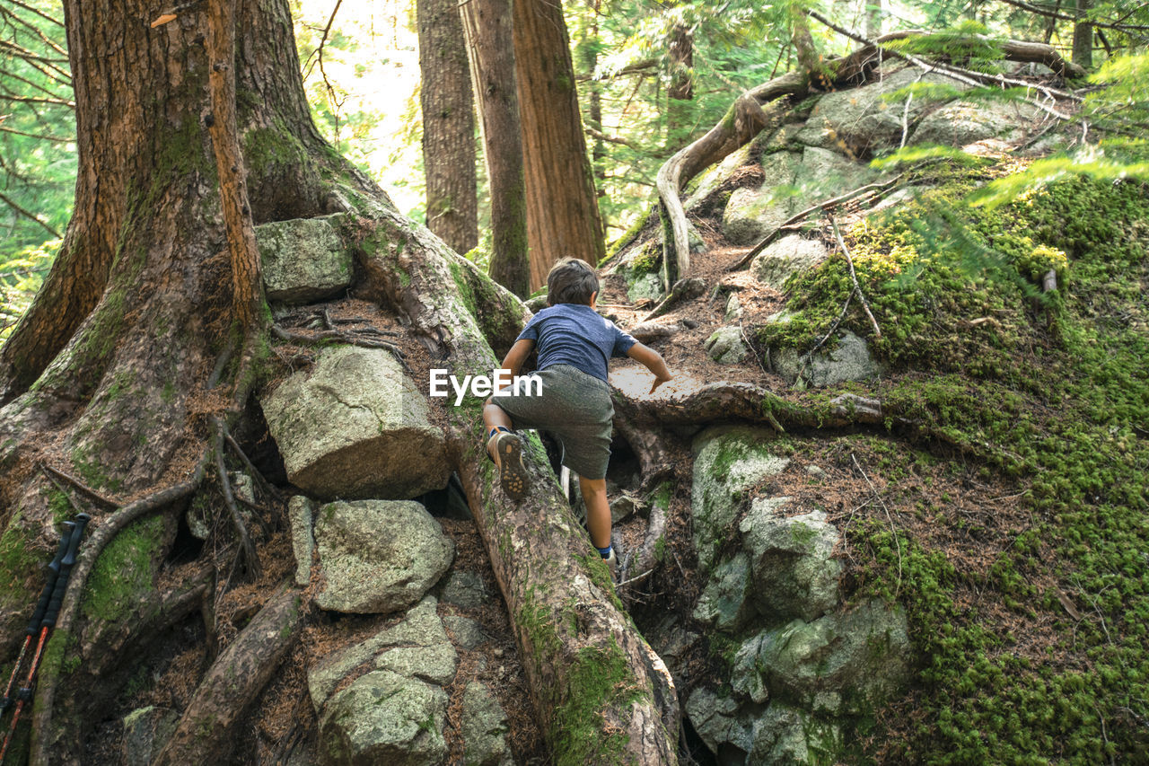 REAR VIEW OF MAN SITTING ON ROCK BY TREE IN FOREST