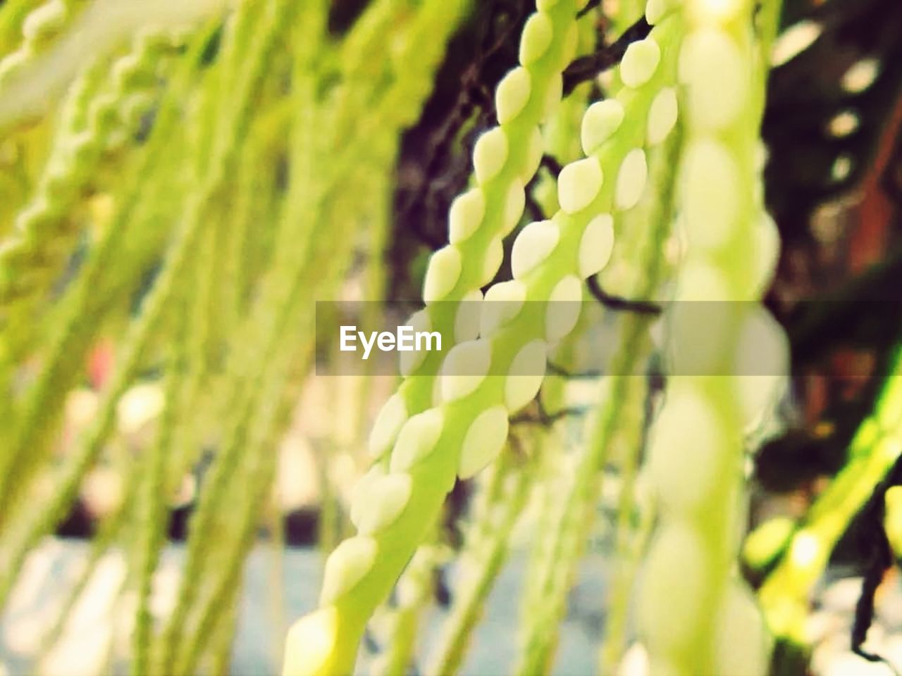 green color, growth, plant, nature, no people, day, outdoors, close-up, fern, frond, fragility, beauty in nature, freshness