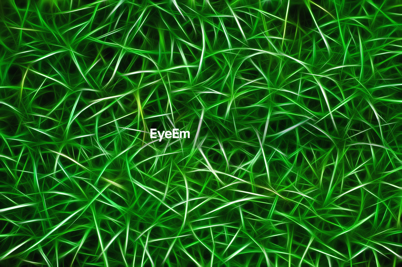 green color, full frame, backgrounds, plant, growth, grass, no people, close-up, nature, beauty in nature, day, high angle view, outdoors, land, blade of grass, field, tranquility, freshness, pattern, lush foliage