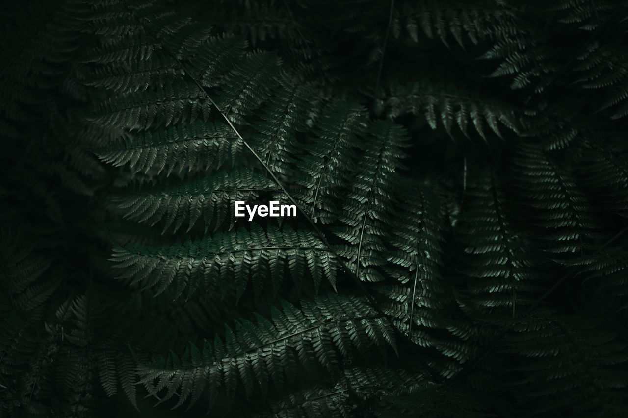 Close-up to fern plant