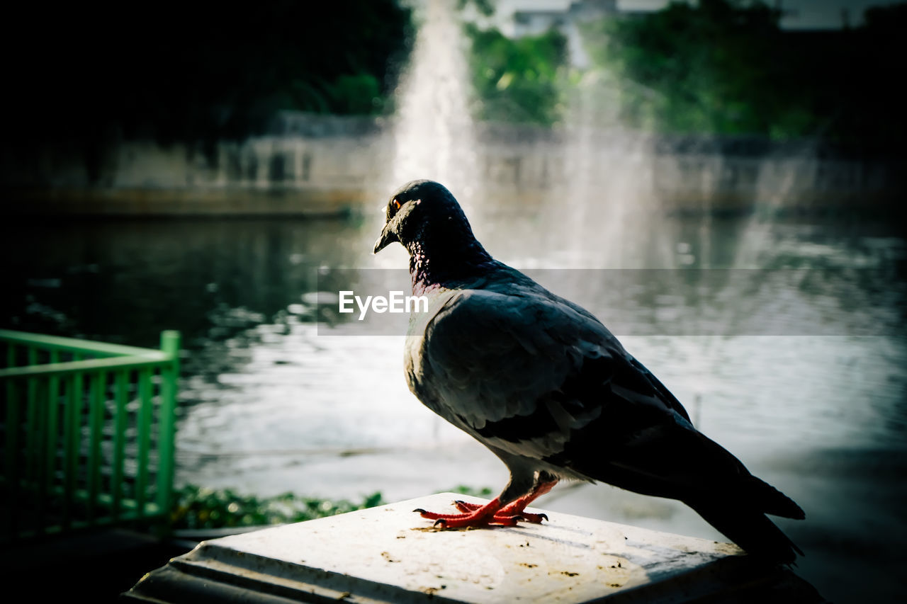 bird, vertebrate, water, animal, animal themes, one animal, animal wildlife, animals in the wild, focus on foreground, day, perching, no people, nature, lake, close-up, railing, outdoors, side view, retaining wall