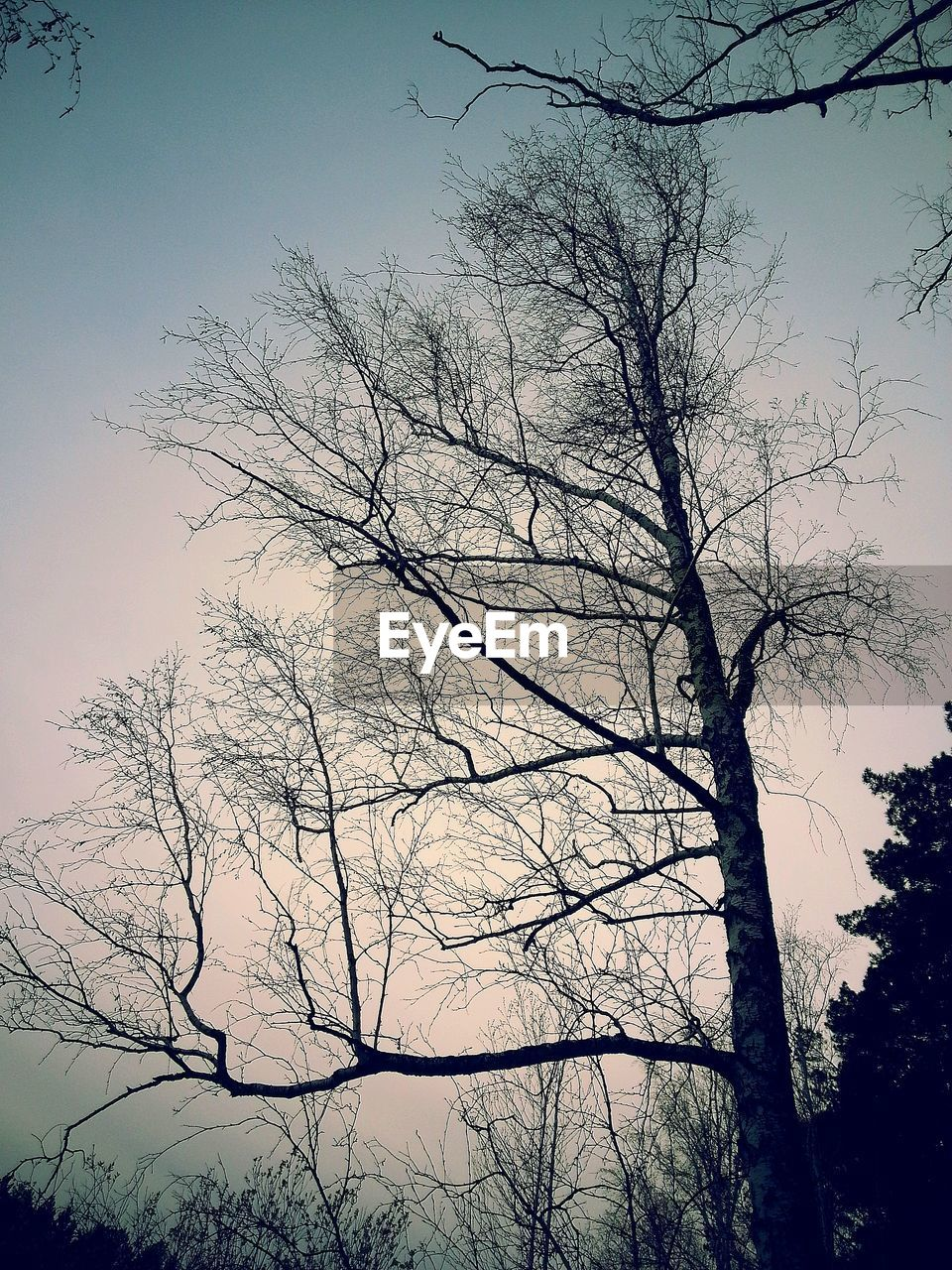 tree, sky, plant, bare tree, silhouette, branch, low angle view, tranquility, no people, nature, beauty in nature, scenics - nature, outdoors, tranquil scene, cloud - sky, day, trunk, tree trunk, non-urban scene