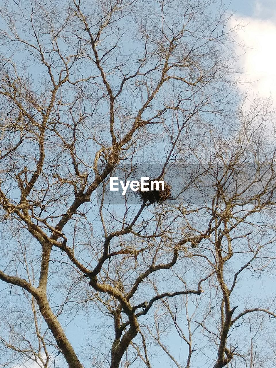 branch, tree, low angle view, bare tree, nature, sky, no people, beauty in nature, outdoors, day, tranquility, animals in the wild, animal themes, scenics, clear sky, bird
