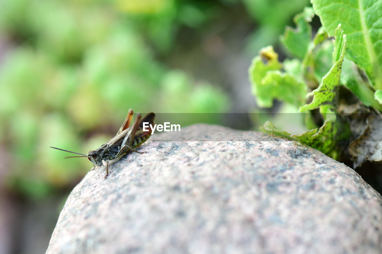animals in the wild, animal, animal themes, animal wildlife, invertebrate, one animal, insect, close-up, selective focus, nature, day, no people, rock, solid, rock - object, outdoors, plant, focus on foreground, zoology, green color, small