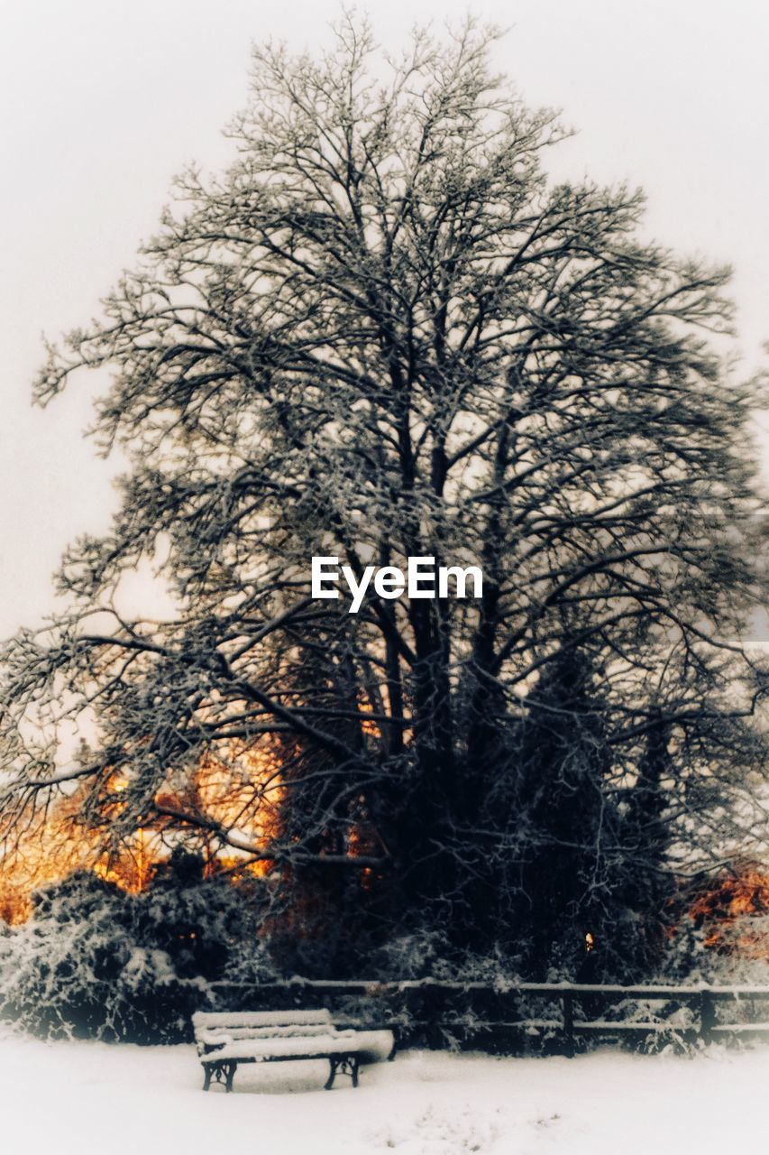 tree, plant, snow, winter, cold temperature, nature, no people, beauty in nature, sky, bare tree, day, tranquility, scenics - nature, outdoors, branch, land, non-urban scene, field, tranquil scene, snowing