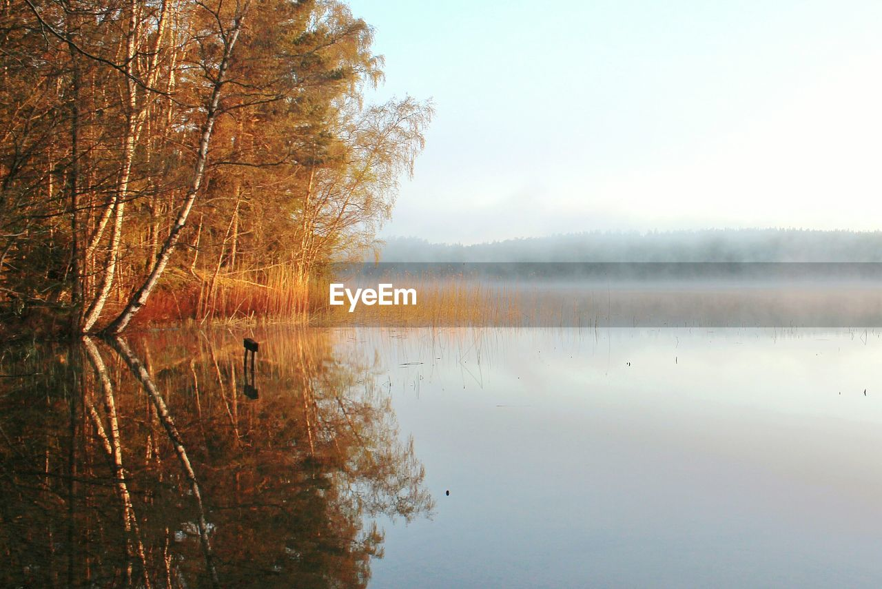 nature, reflection, tranquility, beauty in nature, tranquil scene, tree, scenics, water, lake, no people, idyllic, outdoors, day, autumn, sky, fog, cold temperature, winter, bare tree, branch