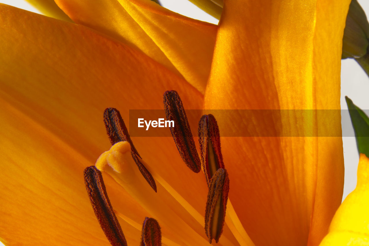 orange color, flower, growth, yellow, beauty in nature, nature, petal, no people, fragility, flower head, plant, close-up, day, freshness, outdoors