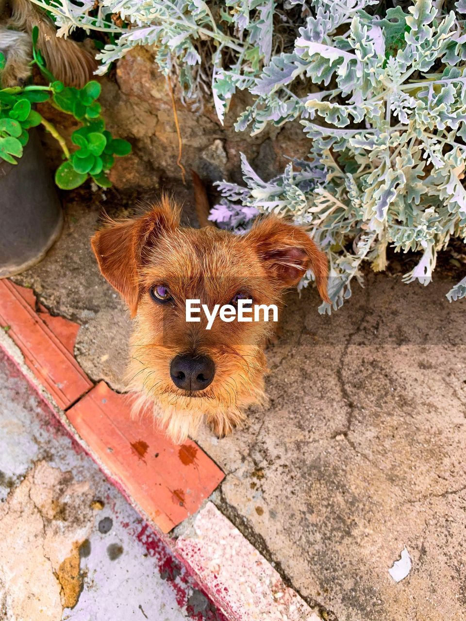 one animal, domestic, mammal, animal themes, pets, domestic animals, animal, canine, looking at camera, dog, portrait, vertebrate, high angle view, no people, day, plant, outdoors, animal body part, plant part, brown, animal head