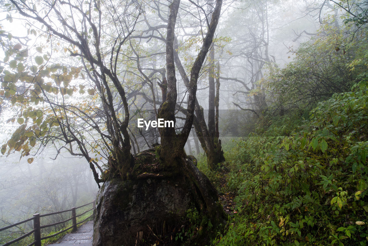 tree, fog, nature, scenics, forest, plant, outdoors, tranquil scene, day, no people, beauty in nature, branch, tranquility, landscape, water, sky