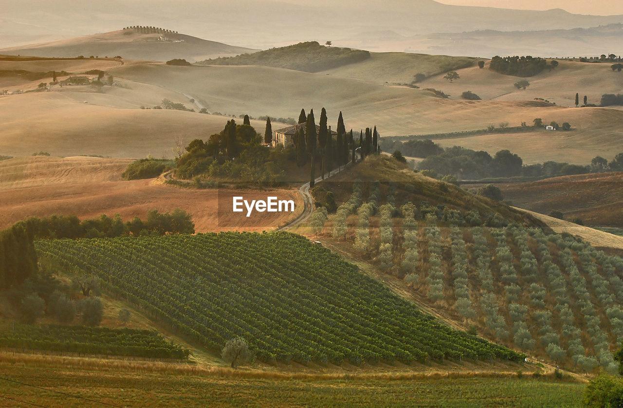 Scenic view of green vineyards