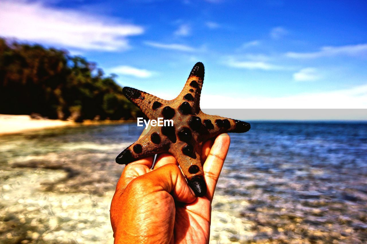 Cropped hand holding starfish by sea against sky
